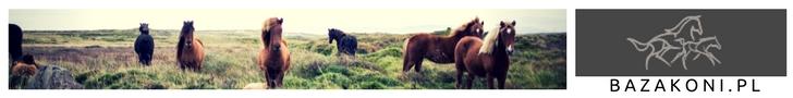 www.bazakoni.pl baza rodowodowa, ogłoszenia, sprzedaż, wyniki koni sportowych, wyniki czempionatów