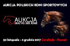 Teraz Polskie Konie - Aukcja Polskich Koni Sportowych