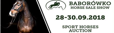 Baborówko Horse Sale Show